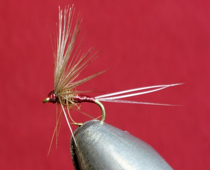 Pardón de Meanna example fly